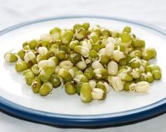 Naklíčené fazole mungo-Foto: Lucianne