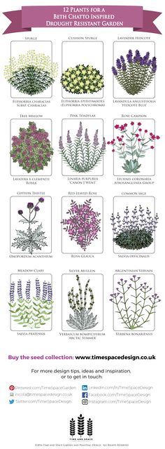12 Plants for a Drought Resistant Garden #droughtresistant #drygarden #gravelgarden #seedcollection #seeds #plantingdesign #gift #gardendesign #infographic   Seed collection available to buy from www.timespacedesign.co.uk