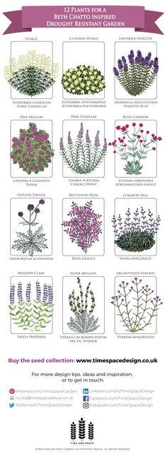 12 Plants for a Drought Resistant Garden