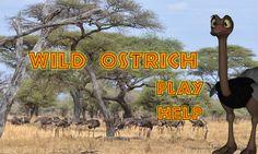 Wild Ostrich Slots