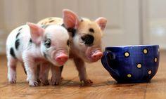 Cutie nuggets!!
