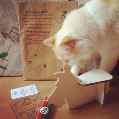 #behindthescenes rsrs Stuart e Leonard na #produção #visualmerchandiser #cats #gatos até o #gato é sustentável rs #gatinho #pets #gatinhos  Visite nossa pagina e nosso Shop Link direto na descrição do perfil :) Conheçam o projeto e vejam nossos produtos sustentáveis :) Espalhe amor Namastê  _/\_  dGreenSP Fábrica de ideias sustentáveis  Visa motivar unir e guiar pessoas através de estratégias sustentáveis para transformar as mesmas e seus entornos com o objetivo de acelerar o desenvolvimento…