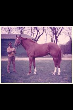 Secretariat was the grandfather or great-grandfather of one of the horses I take care of.