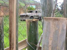 Por trás da cerca