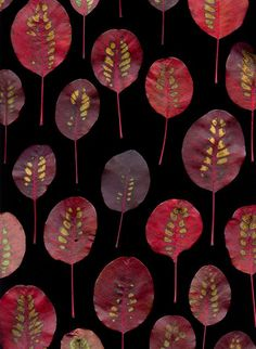 Autumn leaves by Fred 36163 Cotinus coggygria 'Royal Purple' Textures Patterns, Print Patterns, Surface Pattern Design, Color Inspiration, Fiber Art, Photo Art, Nature Photography, Illustration Art, Painting