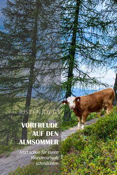 Jetzt schon mal für euren Wanderurlaub schmöckern Bergen, Plants, Tourism, Hiking, Summer, Plant, Planets, Mountains
