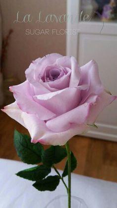 Ocean song rose. La Lavande sugar florist.
