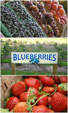 Berry picking at a u-pick farm is fun for the entire family, and most of the varieties are ripe throughout the spring and summer in Oklahoma.