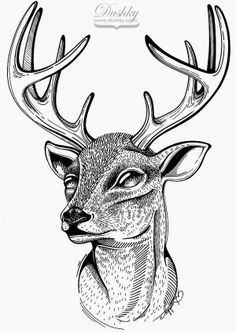 #deer #illustration by #dushky