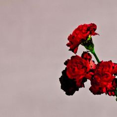 3 CROWNS for John Legend's bran new album Love In The Future. Our review here http://auntbetty.co.uk/2013/09/love-in-the-future-john-legend/