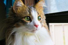 Doughie Closeup by brighteyesgal on DeviantArt