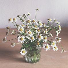 peace Small Flowers, My Flower, Flower Power, Wild Flowers, Beautiful Flowers, Floral Wedding, Wedding Bouquets, Wedding Flowers, Margarita
