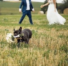 French Bulldog Wedding, Dog Engagement Photos, Animal Photography, Wedding Photography, Funny Jokes For Kids, Let's Get Married, Wedding Poses, Wedding Ideas, Cat Facts