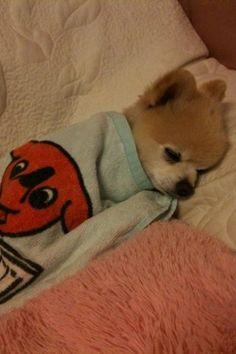 goodnight sleepy bby