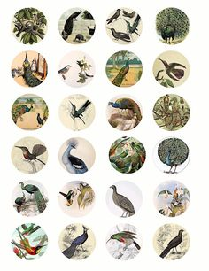 Peacock humming bird vintage clip art collage graphics 1.5 inch circles