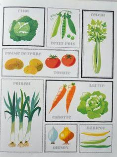Alain Gree vegetable illustrations