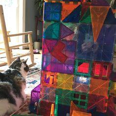 Nero the cat guarding the block structure