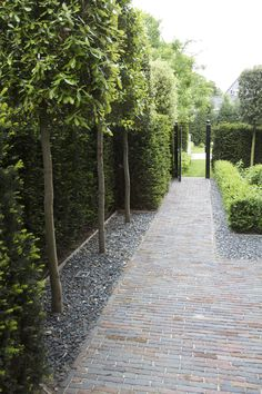 Niche created by hedge for a row of narrow tall trees