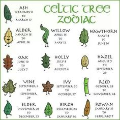 The Celtic Tree Zodiac is based on the ancient idea that the time of our births . - The Celtic Tree Zodiac is based on the ancient idea that the time of our births is pivotal to the f - Tarot, Zodiac Meanings, Herb Meanings, Celtic Tree, Celtic Dragon, Celtic Symbols, Celtic Signs, Mayan Symbols, Egyptian Symbols