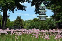 Ladew Topiary Gardens - award winning gardens, nature walk and manor house.