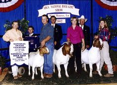Powell-Holman Grand Champions. Show goats for sale.