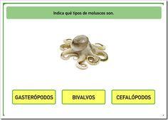 Clases de moluscos