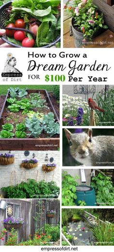 How to grow a dream garden for 100 dollars a year! Frugal garden tips from an experienced, creative gardener