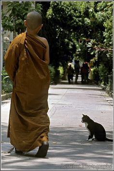 Le jeune moine Tibétain et le chaton de profil