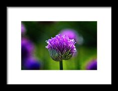 Violet flower Framed Print by Roberto Pagani Wall Art For Sale, Flower Frame, Hanging Wire, Fine Art America, Framed Prints, Flowers, Plants, Poster, Florals