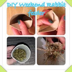 DIY - Weekend Rabbit food.  Need to leave your Rabbits for the night? Make a few of these for them to chew their way into and add them to the cage before you leave along with extra water.     Take an old toilet roll tube, close up one end by pushing the edges inside.  Flip it round and half fill with food then stuff with hay.  Your bunnies with have great fun tearing into these parcels!   Find more Crafty tips at www.craftynotshifty.wordpress.com