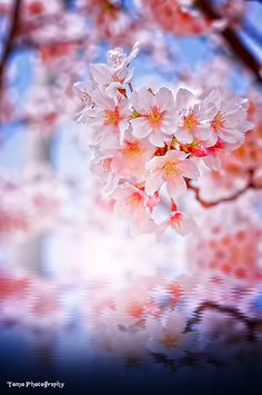 Free Flower Animated Gifs at Best Animations Photo Bokeh, Gif Photo, Retro Images, Gif Animé, Cool Animations, Flower Images, Cute Wallpapers, Cherry Blossom, Gifs