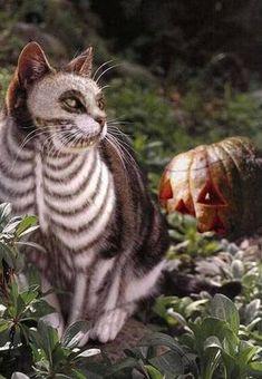 Gato Pintado