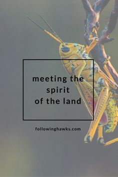 Who is the Spirit of the Land where you live? It took a few months of encouragement before the one on my property showed up.