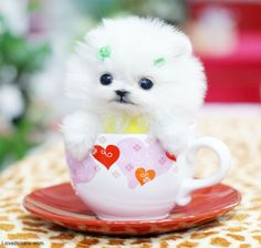Cute Little Puppy cute beautiful baby white adorable dog puppy animal cup mug small