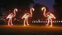 Lichterfest im Zoologischen Stadtgarten