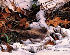 """""""Winter Junco"""" by Russell Cobane"""