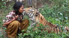 Friendship of a Bengal Tiger and Indonesian Sholeh