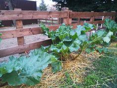 Cabbage, Vegetables, Plants, Food, Meal, Essen, Vegetable Recipes, Flora, Hoods