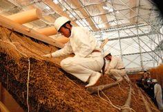 写真:昨年11月に公開された萱葺き作業。20年間もつように厚さ60~90センチと厚めに葺く=三重県伊勢市の伊勢神宮外宮