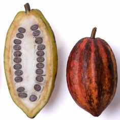 Cocoa pods, how they look when cut open, this shape could be made into a symbol for my logo as it would communicate the taste of the brand well. Cocoa Fruit, Chocolate Brands, Cacao Chocolate, Le Cacao, Cacao Beans, Theobroma Cacao, Exotic Fruit, Seed Pods, Fruit And Veg