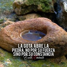 Frases Beauty Trends 2019 beauty trends for 2019 Inspirational Phrases, Motivational Phrases, Jiu Jitsu Frases, General Quotes, Quotes En Espanol, Millionaire Quotes, Spanish Quotes, Some Words, Beauty Trends