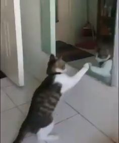 Proof that cats are nuts. - Martina Halter-Burkhardt - Proof that cats are nuts. Proof that cats are nuts. Cute Animal Videos, Funny Animal Pictures, Cute Funny Animals, Cute Baby Animals, Funny Dogs, Animals And Pets, Animal Pics, Cute Kittens, Cats And Kittens