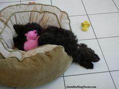 DOG DAYS OF WINTER #Puppy #Dog #Sleep More Cute, Dog Days, Funny Photos, Bean Bag Chair, Sleep, Puppies, Fine Art, Winter, Dogs