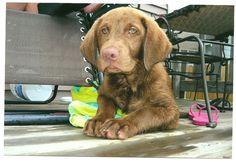 Yogi Puppy eyes
