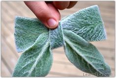 How to make a lamb's ear bow - this would make the most cutest natural boutonniere in the history of...ever.