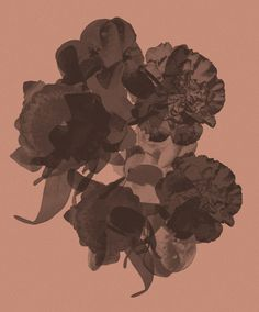 Contemporary photography and artwork by Mauren Brodbeck Loyalland, Untitled 003 Contemporary Photography, Contemporary Art, Filmmaking, Collage, Abstract, Artist, Artwork, Flowers, Plants