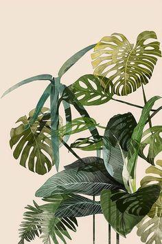 lush green leaves vegetation botanicals