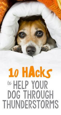 """Let's face it - storms are scary. They're startling, confusing, and a major source of anxiety for our furriest family members. This thunderstorm season, make sure your pet is prepared to """"weather the storm"""" using these 10 hacks for pet parents: Dog Separation Anxiety, Dog Anxiety, Anxiety Help, I Love Dogs, Puppy Love, Game Mode, Pet Sitter, Dog Health Tips, Pet Health"""