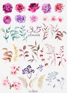 This set of high quality hand painted watercolor elements Flowers - Roses, Ranunculus, Peonies and herbs Perfect graphic for wedding invitations, greeting cards, photos, posters, quotes and more.   Item details:  35 PNG files. (300 dpi, RGB, transparent background) Elements size (larger side) aprox.: 8 inch - 2 inch Watercolor Burgundy Wreaths & Bouquets :  https://www.etsy.com/ru/listing/253120697/watercolor-burgundy-wreath-bouquets-with?ref=listing-sho...
