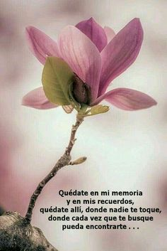 The site is about inspiration. Positive Phrases, Positive Thoughts, Love In Spanish, Love Quotes, Inspirational Quotes, Famous Quotes, Daddy Quotes, Motivational Phrases, Miss You Mom
